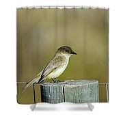 Eastern Phoebe At Falcon State Park Of Texas Shower Curtain