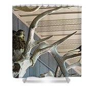 Eastern Phoebes Shower Curtain