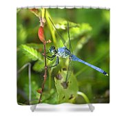 Eastern Pondhawk Dragonfly Shower Curtain