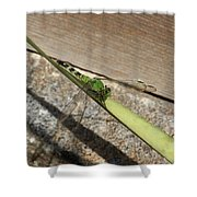 Eastern Pondhawk On A Leaf Shower Curtain