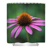 Eastern Purple Coneflower Shower Curtain by Ben Shields