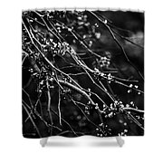 Eastern Redbud In Black And White Shower Curtain