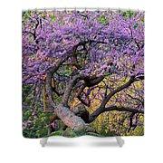 Eastern Redbud Arlington Virginia Spring Bloom Shower Curtain