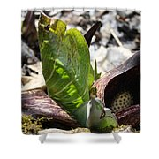 Eastern Skunk Cabbage  Shower Curtain