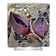 Eastern Skunk Cabbage Spathes - Symplocarpus Foetidus Shower Curtain