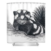 Eastern Spotted Skunk Shower Curtain