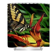 Eastern Tiger Swallow Tail Butterfly Shower Curtain