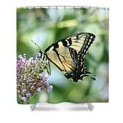 Eastern Tiger Swallowtail 2 Shower Curtain