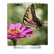 Eastern Tiger Swallowtail 2016-1 Shower Curtain