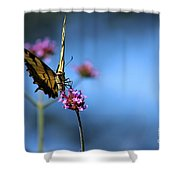 Eastern Tiger Swallowtail And Blue Sky Shower Curtain