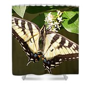 Eastern Tiger Swallowtail  Butterfly Wingspan Shower Curtain