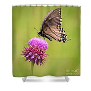 Eastern Tiger Swallowtail Dark Form  Shower Curtain