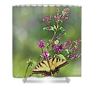 Eastern Tiger Swallowtail No. 4 Shower Curtain