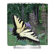 Eastern Tiger Swallowtail Sipping Nectar Shower Curtain