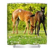 Easy Pickins Shower Curtain