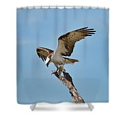 Eating Osprey-1 Shower Curtain by Rudy Umans