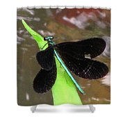 Ebony Jewel Damselfly Shower Curtain
