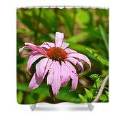Echinacea 16-02 Shower Curtain
