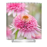 Echinacea Butterfly Kisses Shower Curtain