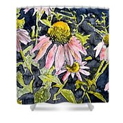 Echinacea Coneflower 2 Shower Curtain