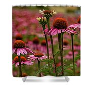 Echinacea Front And Center Shower Curtain