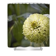 Echinacea Milkshake Shower Curtain