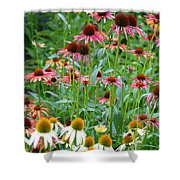 Echinacea Multi Mix Shower Curtain
