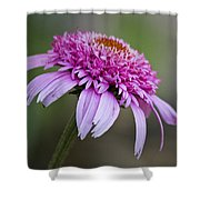 Echinacea Pink Double Delight Shower Curtain