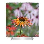 Echinacea Purpurea Orange Passion Flower Shower Curtain