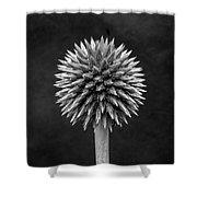 Echinops Monochrome Shower Curtain