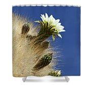 Echinopsis Atacamensis Cactus In Flower Shower Curtain