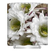 Echinopsis Blossoms  Shower Curtain