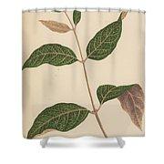 Echites Nutans Shower Curtain