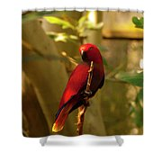 Eclectus Parrot Digital Oil Painting Shower Curtain