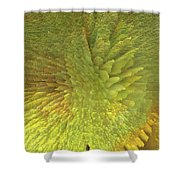 Eclosion  Matutina Shower Curtain