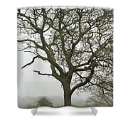 Edgartown Scene Shower Curtain