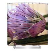 Edible Beauty Shower Curtain