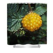 Edible Yellow Salmonberry Rubus Shower Curtain