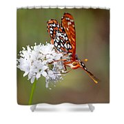 Edith's Checkerspot Five Shower Curtain