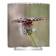 Edith's Checkerspot Four Shower Curtain
