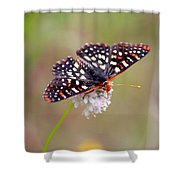Edith's Checkerspot Three Shower Curtain