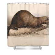 Edward Lear - A Weasel Shower Curtain