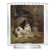 Edwin Douglas 1848-1914 A Cavalier King Charles Spaniel Shower Curtain