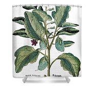 Eggplant, 1735 Shower Curtain