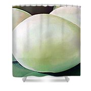 Eggs On Fiesta Vintage Dinnerware Shower Curtain