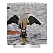 Egret And Cormorant Wings Shower Curtain