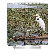 Egret And Turtles Shower Curtain