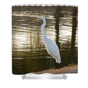 Egret At Waters Edge Shower Curtain