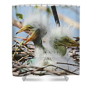 Egret Chicks In Nest With Egg Shower Curtain