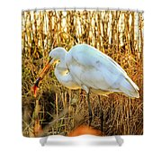 Egret Fishing In Sunset At Forsythe National Wildlife Refuge Shower Curtain